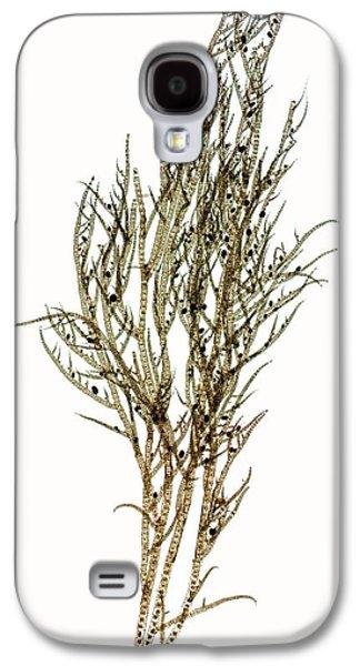Seaweed (ectocarpus Confervoides) Galaxy S4 Case