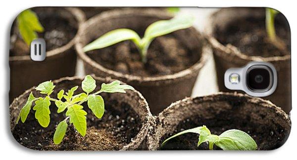 Seedlings  Galaxy S4 Case by Elena Elisseeva
