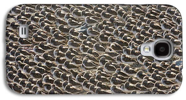 Semipalmated Sandpipers Sleeping Galaxy S4 Case