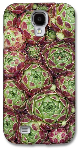Sempervivum Atlanticum Pattern Galaxy S4 Case by Tim Gainey