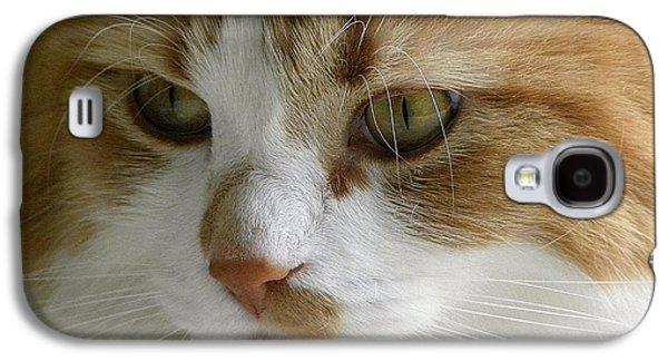 Serious Gato 3 Galaxy S4 Case by Julie Palencia