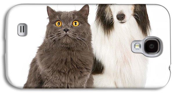 Shetland Sheepdog And Gray Cat Galaxy S4 Case
