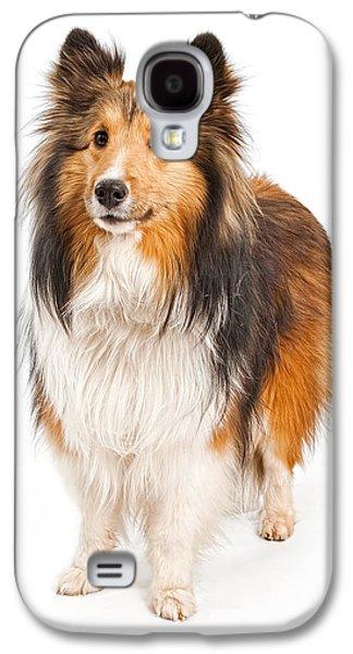 Shetland Sheepdog Dog Isolated On White Galaxy S4 Case