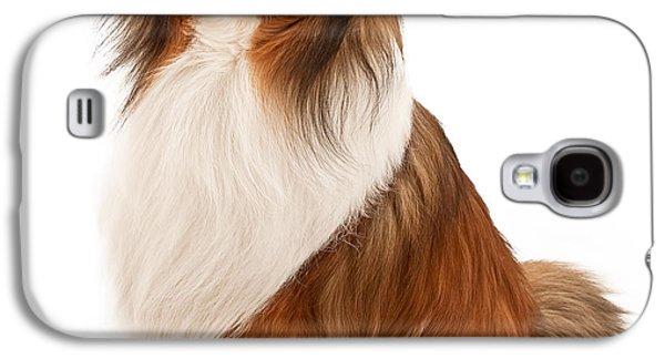 Shetland Sheepdog Isolated On White Galaxy S4 Case