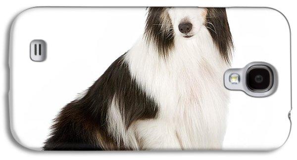 Shetland Sheepdog With Blue Eyes Stock Photo  Galaxy S4 Case