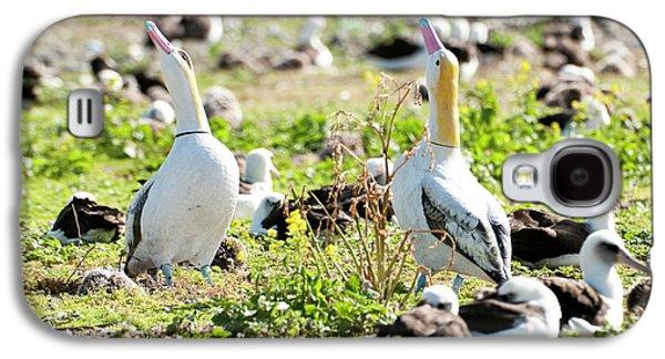 Short-tailed Albatross (phoebastria Galaxy S4 Case by Daisy Gilardini