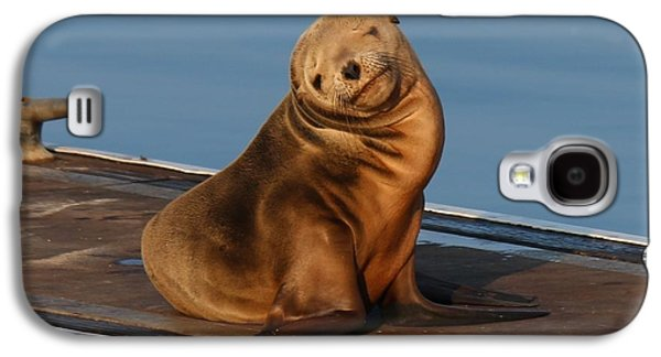 Shy Sea Lion Pup  Galaxy S4 Case