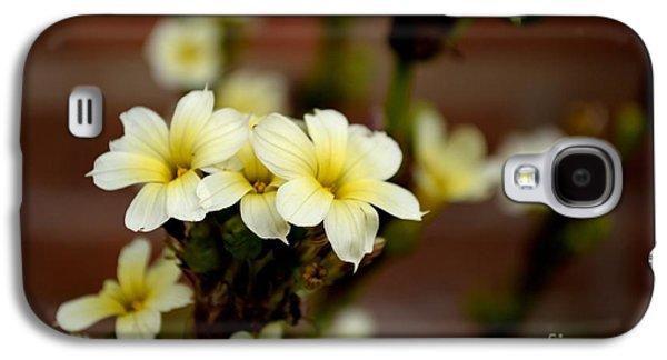 Sisyrinchium Striatum Galaxy S4 Case