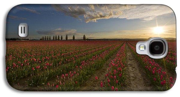 Skagit Tulip Fields Sunset Galaxy S4 Case by Mike Reid