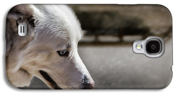 Sled Dog Galaxy S4 Case by Bob Orsillo