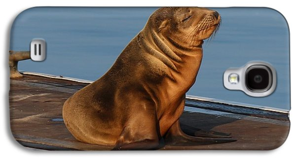Sleeping Wild Sea Lion Pup  Galaxy S4 Case