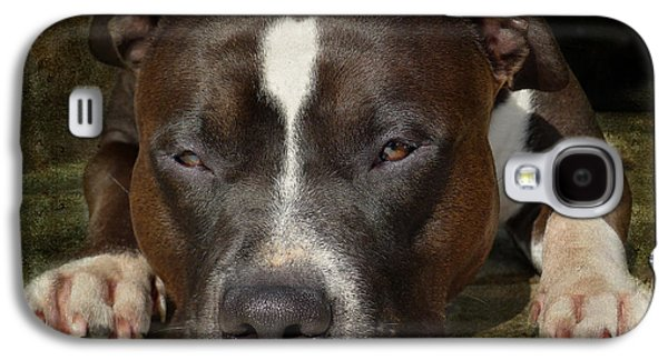 Bull Galaxy S4 Case - Sleepy Pit Bull by Larry Marshall
