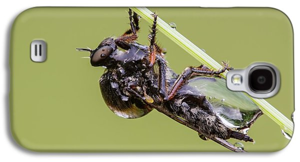 Slender Footed Robber Fly Galaxy S4 Case