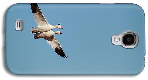 Snow Geese (chen Caerulescens Galaxy S4 Case