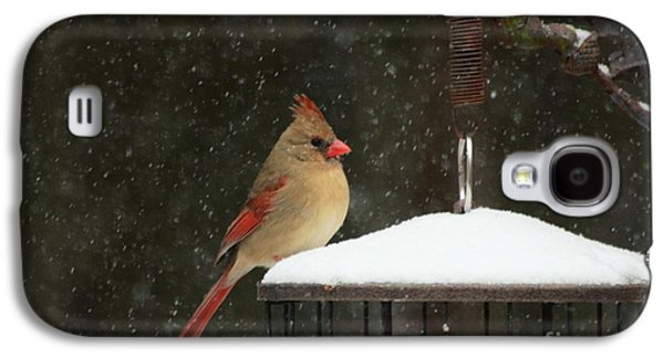 Snowy Cardinal Galaxy S4 Case by Benanne Stiens
