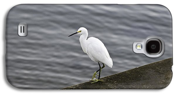 Galaxy S4 Case featuring the photograph Snowy Egret by Anthony Baatz