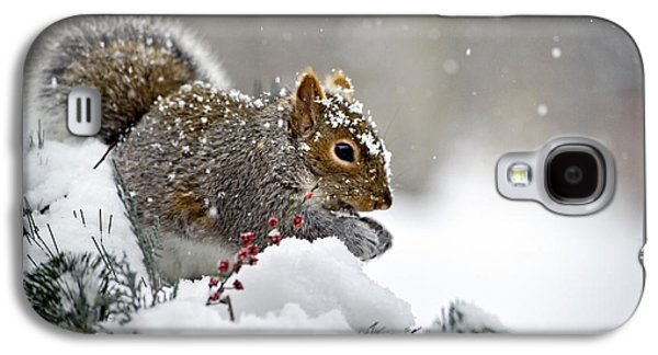 Snowy Squirrel Galaxy S4 Case by Christina Rollo
