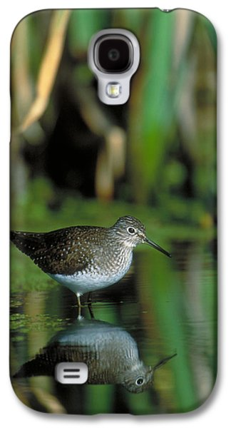 Solitary Sandpiper Galaxy S4 Case