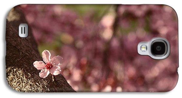 Solo In The Blossom Chorus Galaxy S4 Case