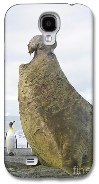 Southern Elephant Seal Bull Roaring Galaxy S4 Case by Yva Momatiuk and John Eastcott
