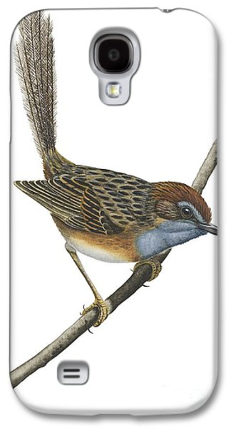 Wren Galaxy S4 Case - Southern Emu Wren by Anonymous