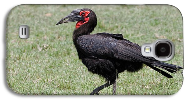 Southern Ground Hornbill, Maasai Mara Galaxy S4 Case by Adam Jones