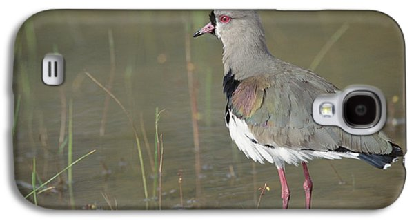 Southern Lapwing In Marshland Pantanal Galaxy S4 Case
