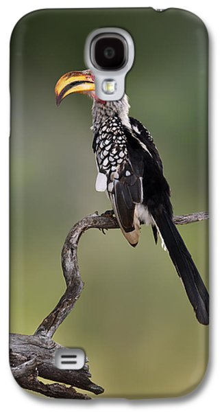 Southern Yellowbilled Hornbill Galaxy S4 Case by Johan Swanepoel