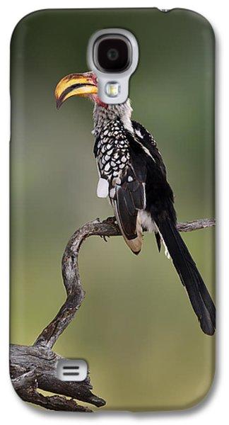 Southern Yellowbilled Hornbill Galaxy S4 Case