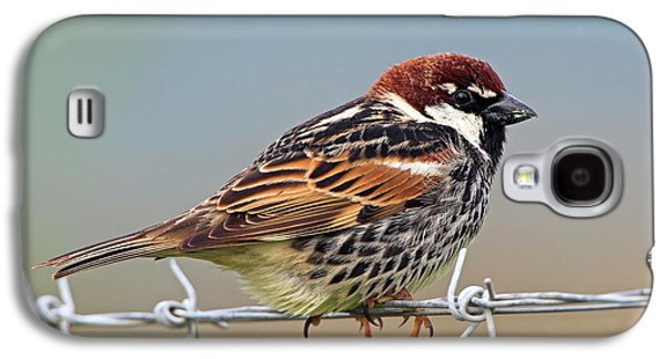 Spanish Sparrow On Barbed Wire Galaxy S4 Case
