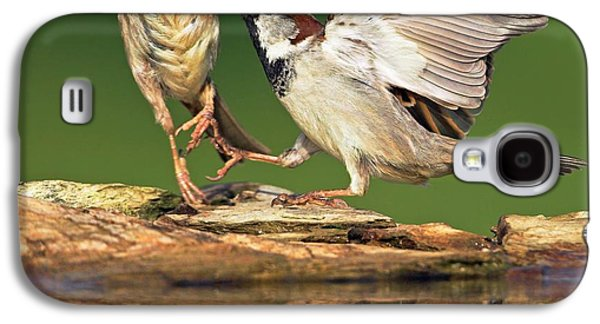 Sparrows Fighting Galaxy S4 Case