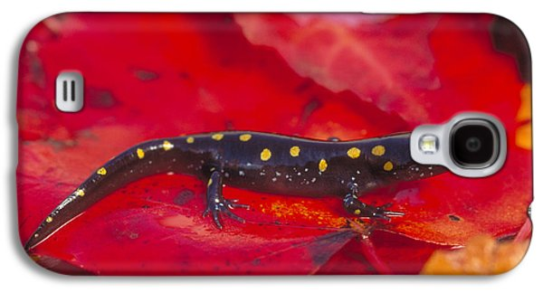 Spotted Salamander Galaxy S4 Case by Paul J. Fusco