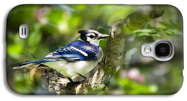 Spring Blue Jay Galaxy S4 Case by Christina Rollo