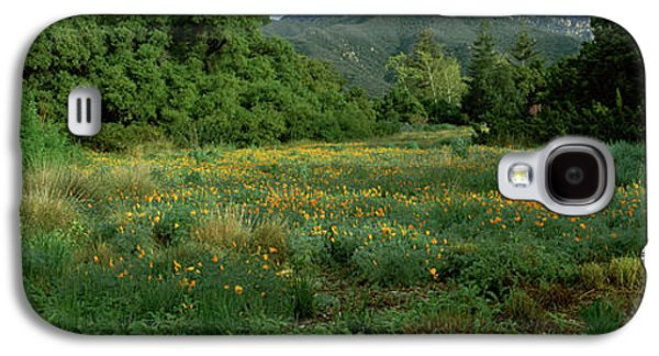 Spring Poppy Flowers In A Garden, Santa Galaxy S4 Case by Panoramic Images