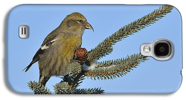 Crossbill Galaxy S4 Case - Spruce Cone Feeder by Tony Beck