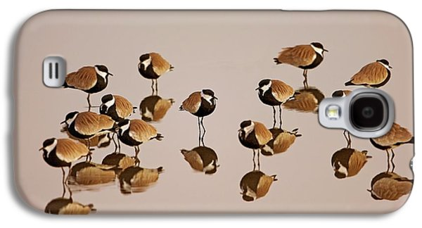 Spur-winged Lapwing (vanellus Spinosus) Galaxy S4 Case