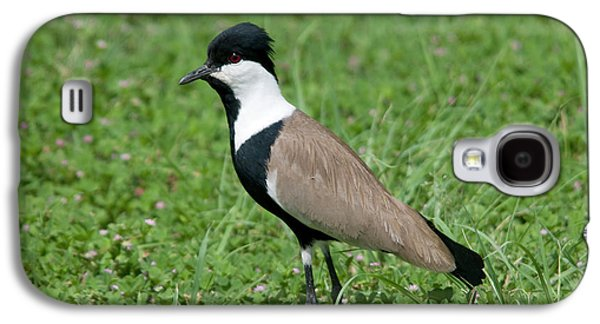 Spur-winged Plover Galaxy S4 Case