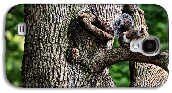 Squirrel Guarding Watering Knot Galaxy S4 Case by Chris Flees
