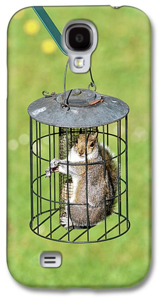 Squirrel In Bird Feeder Galaxy S4 Case