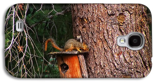 Squirrel On Top Of Birdhouse Galaxy S4 Case by Chris Flees