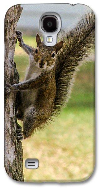 Squirrel Galaxy S4 Case by Zina Stromberg