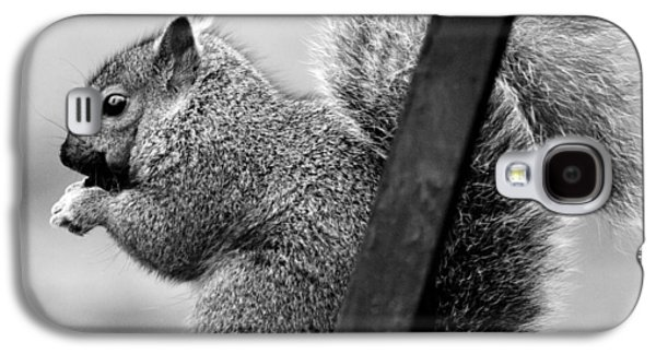 Galaxy S4 Case featuring the photograph Squirrels by Ricky L Jones