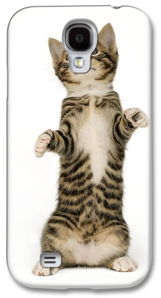 Standing Cat Ck305 Galaxy S4 Case by Greg Cuddiford