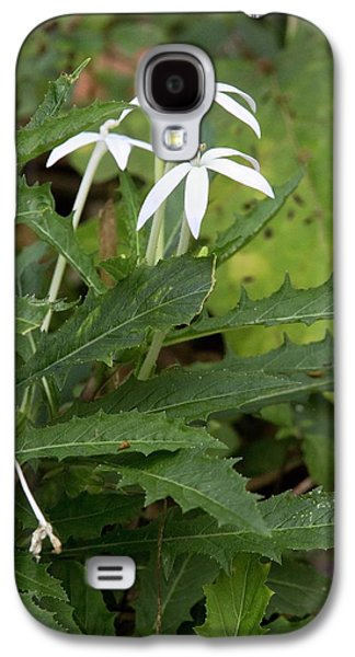 Star Flower (hippobroma Longiflora) Galaxy S4 Case by Bob Gibbons