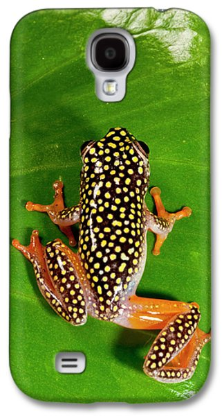Starry Night Reed Frog, Heterixalus Galaxy S4 Case