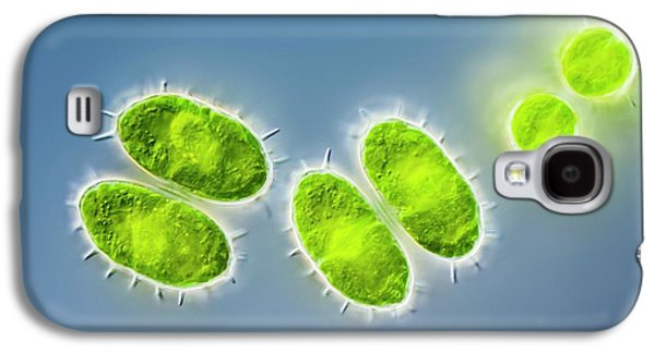 Staurastrum Sp. Green Alga Galaxy S4 Case