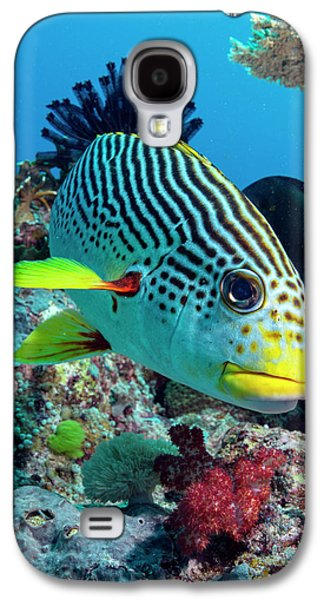 Striped Sweetlips On A Reef Galaxy S4 Case by Louise Murray