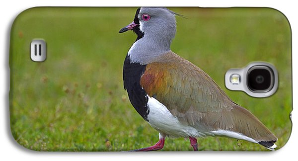 Strutting Lapwing Galaxy S4 Case by Tony Beck