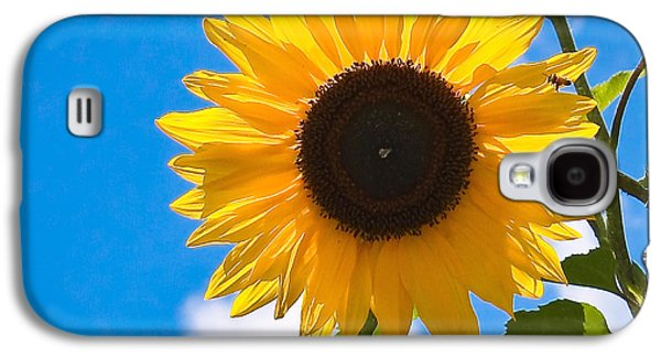 Sunflower And Bee At Work Galaxy S4 Case