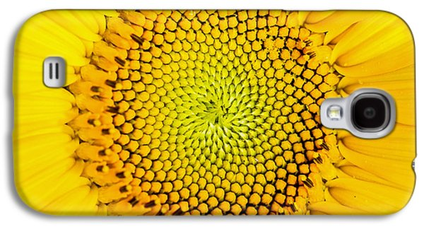 Sunflower Galaxy S4 Case - Sunflower  by Edward Fielding